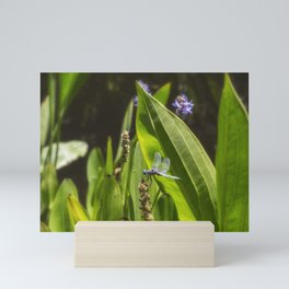 Great Blue Skimmer, No. 2 Mini Art Print