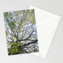 Centenary oak with the trunk covered in moss and green plants Stationery Cards