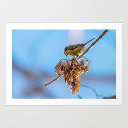 Blue tit on branch, Eurasian blue tit, (Cyanistes caeruleus) Cute little Bird Art Print