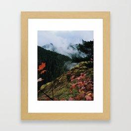 Salmon-Huckleberry Wilderness Framed Art Print