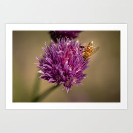 Bee and chive Art Print