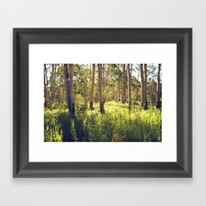 Summer Aspens Framed Art Print