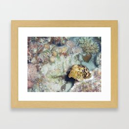 Baby Cuttlefish and Hard Coral Framed Art Print