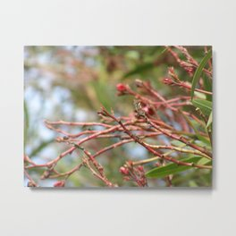 Red Branches Metal Print