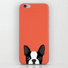 Boston Terrier iPhone & iPod Skin