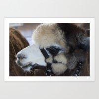 alpaca Art Prints featuring Alpaca by Deborah Janke
