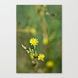 Golden flowers by the lake 1 Canvas Print