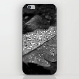 Dew Drops on Autumn Leaves iPhone Skin