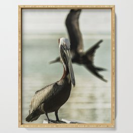Pelican Photobombed by a Frigatebird Serving Tray