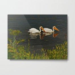 Pelicans in Edmonton - Hermitage Metal Print