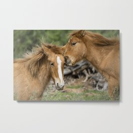 A Little Playtime Metal Print
