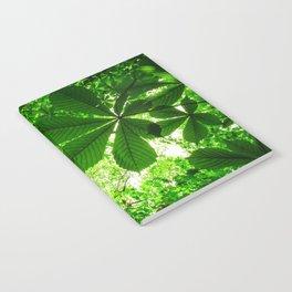 Rainforest Radiance Notebook