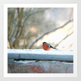 Red Plumage - Bullfinch male - #decor #society6 #buyart Art Print