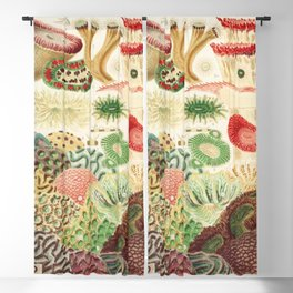 Great Barrier Reef Corals from The Great Barrier Reef of Australia (1893) by William Saville-Kent Blackout Curtain