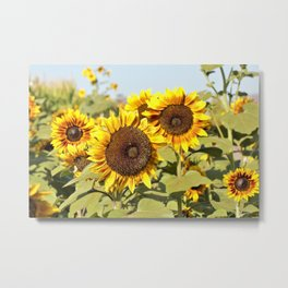 Sunflower Fields Forever by Reay of Light Photography Metal Print