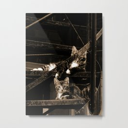 Back street Cats Metal Print
