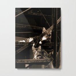 Back street Cats Metal Print