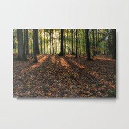 Autumn Forest Sunrise. Metal Print
