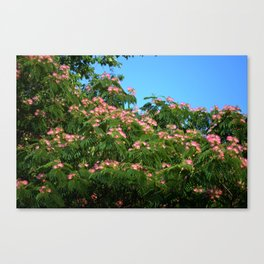 Mimosa Branch Canvas Print