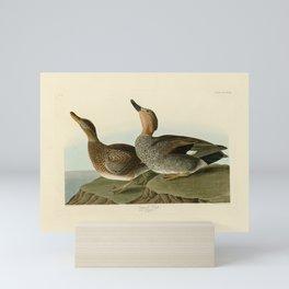 348 Gadwall Duck17 Mini Art Print