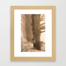 Sugaring, Jericho, VT Framed Art Print