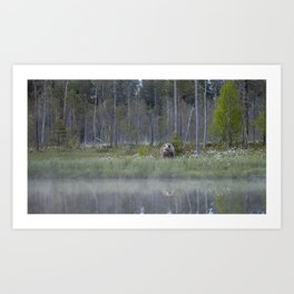 Wild brown bear and its reflection in forest creek Art Print