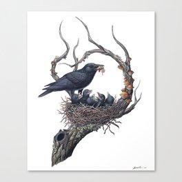 American Crow Canvas Print