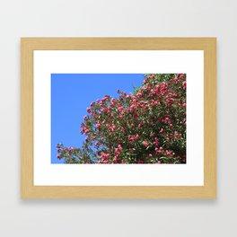 Oleandro Framed Art Print