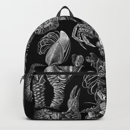 Ernst Haeckel Cirripedia Barnacles Crabs Backpack