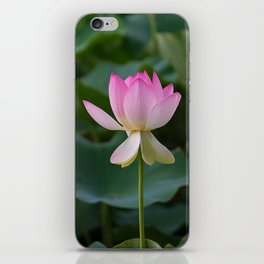 water lily #society6 #decor #buyart iPhone Skin