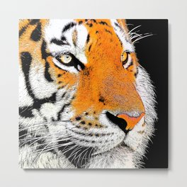 Tiger face closeup drawing Metal Print
