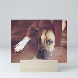 Soulful Dog in Costa Rica Mini Art Print