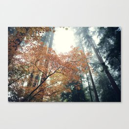 Dancing Maples 1 Canvas Print