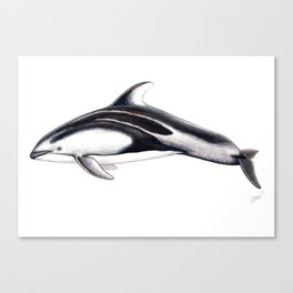 Pacific white-sided dolphin Canvas Print