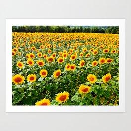 Field of Sunny Flowers Art Print