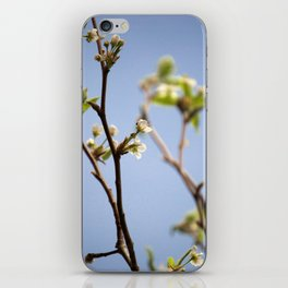 Spring Buds and the Bee iPhone Skin