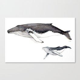 North Atlantic Humpback whale with calf Canvas Print
