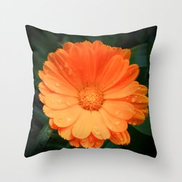 Captivating Calendula Throw Pillow