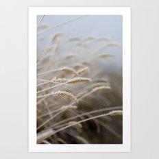 Frosty Grass Plumes Art Print