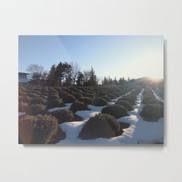 Lavender at Lake Kawagoe Metal Print