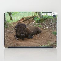 buffalo iPad Cases featuring Buffalo by FortuneArt&Photography