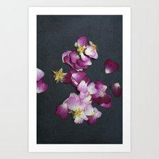 Wild Rose Petals Art Print