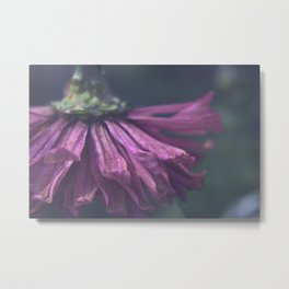 Plucking Petals Metal Print