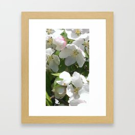 Blossums Framed Art Print