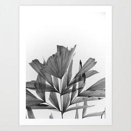 black and white tropics Art Print