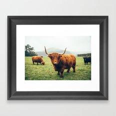 Highland cattle Framed Art Print
