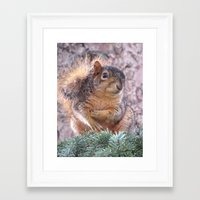 squirrel Framed Art Prints featuring Squirrel by Sarahpëa