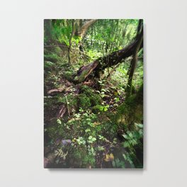 Enchanted Forest - Study IV Metal Print