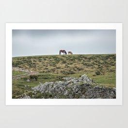 Asturcon, Asturian pony Art Print