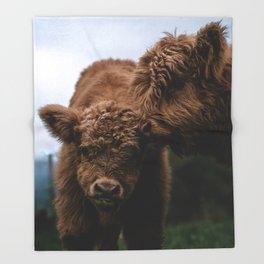 Scottish Highland Cattle Calves - Babies playing Throw Blanket